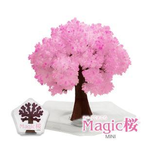 マジック桜ミニ Magic桜 お祝い プレゼント エア花見 インドア花見 記念|otogino
