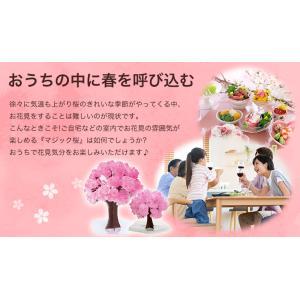 マジック桜ミニ Magic桜 お祝い プレゼント エア花見 インドア花見 記念|otogino|03