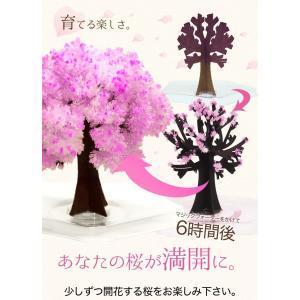マジック桜ミニ Magic桜 お祝い プレゼント エア花見 インドア花見 記念|otogino|05