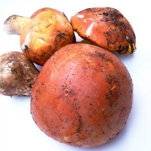 オーボリー(タマゴ茸) 約500g |otokonodaidokoro