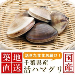 ハマグリ 国産 貝殻 千葉 500g