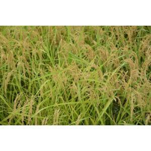 新米令和2年度愛知県産音羽米 無農薬玄米30kg(1袋)|otowamai|08