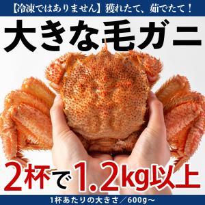 浜茹で毛ガニ(350g前後×4杯)冷凍品ではありません!1杯あたり745円の超お買い得品!|otr-ishinomaki