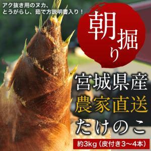 【条件付き送料無料】高橋さんの朝掘りたけのこ(約3kg/3〜4本)冷蔵|otr-ishinomaki