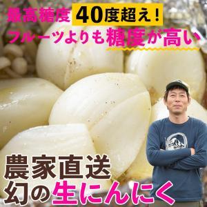【予約品6月上旬お届け予定】農家直送 獲れたて生にんにく(大小込み1kg)国産(宮城県) 冷蔵 otr-ishinomaki