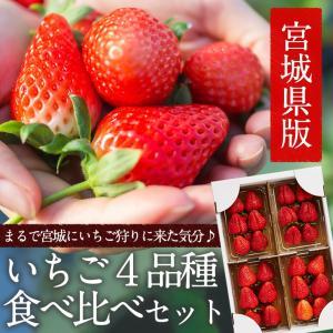 たっぷり 約1kg!宮城県産いちご4品種食べ比べセット(大粒...