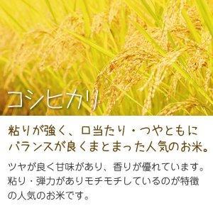 コシヒカリ(田中農産) 10kg 令和2年 滋賀県産 近江米 - 道の駅草津|oumitokuichi|02