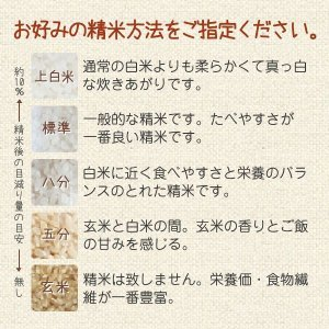 コシヒカリ(田中農産) 10kg 令和2年 滋賀県産 近江米 - 道の駅草津|oumitokuichi|04