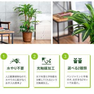 人工観葉植物 フェイクグリーン 光触媒 ベンジャミン 幸福の木(ドラセナ) 2本セット 送料無料|outlet-f|04