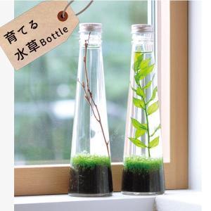 育てる水草 グラスボトル 栽培セット 発芽保障 栽培キット 和風庭園 グリーン いやし アクアリウム テラリウム 聖新陶芸 夏向 p-comfort