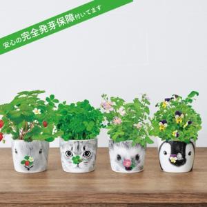 Hana Animals 栽培キット 発芽保障  ワイルドストロベリー 四つ葉のクローバー ビオラ ミニバラ 栽培セット 秋 p-comfort
