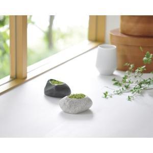 プリザーブドモス 石 苔  和風庭園 グリーン スナゴケ風 聖新陶芸 箱庭 夏向 p-comfort