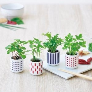 おちょこで薬味栽培セット 発芽保障 しそ とうがらし わさび菜 みつ葉  香草 聖新陶芸 p-comfort
