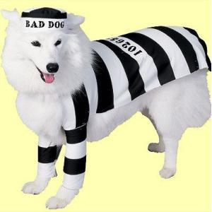 プリズン ドッグ ペット用Sサイズ (Prison Dog S)  (504317)_HB|p-kaneko