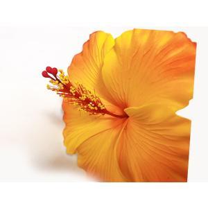 ハイビスカスピック(タイプ2)黄色/オレンジ Lサイズ(11cm)|p-para|03