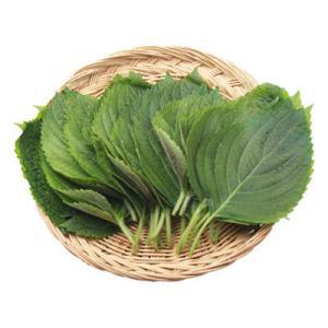 『韓国産野菜』エゴマの葉 えごまの葉(1束20枚入)[生野菜] paldo