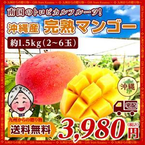 沖縄マンゴー 完熟 マンゴー 約1.5kg(3〜6玉)  沖縄 数量限定 芳醇な甘い香り とろける旨み マンゴー 取り寄せ 送料無料 ワケあり わけあり 食品 得トクセール|palm-gift