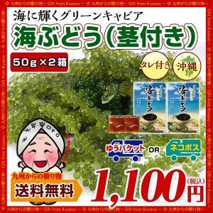 海ぶどう100g(50g×2箱+シークヮーサー風味タレ2袋) 戻し方の紙入り 届いてすぐ食べれる お取り寄せ 送料無料 食品 海ぶどう 得トクセール palm-gift