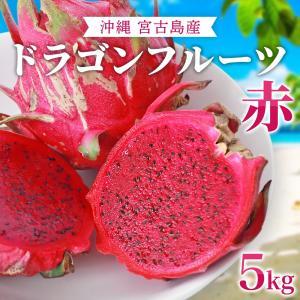 ドラゴンフルーツ(赤)沖縄産 無農薬 宮古島から産地直送!甘くて美味しい レッドピタヤ 送料無料 (5kg)