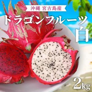 ドラゴンフルーツ(白)沖縄産 無農薬 宮古島から産地直送!甘くて美味しい ホワイトピタヤ 送料無料 (2kg)