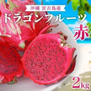 ドラゴンフルーツ(赤)沖縄産 無農薬 宮古島から産地直送!甘くて美味しい レッドピタヤ 送料無料 (2kg)