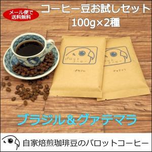 コーヒー豆 お試し セット 100g×2種 ブラジル グァテマラ