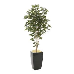 メーカー直送 アーバンベンジャミン1.8 946A600 光触媒人工植物 光の楽園 2019 W80×D70×H180cm|parusu