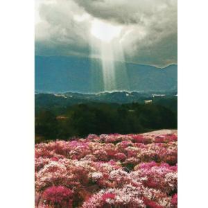 奇跡の写真 秋元隆良 光立つ時代 (令和)【15-20営業日前後で出荷】|parusu