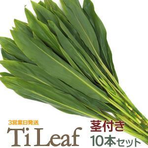 ティリーフ 茎付き Tileaf 緑 約60-90cm 10枚セット 3営業日以内に発送|pauskirt