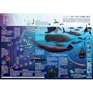 海から始まる動物の進化 A2判 |pcost