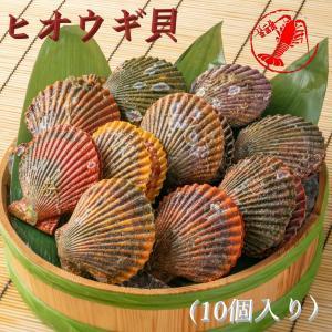 ヒオウギ貝10個 /【アッパ貝 日の出貝】|pearlshokuhinten