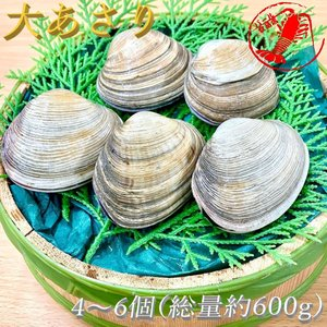 大あさり4~6個(総量約600g)【大アサリ オオアサリ】|pearlshokuhinten