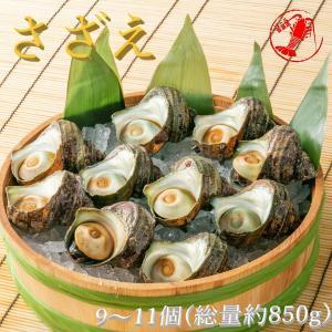 さざえ9〜11個(総量約850g) /【サザエ】|pearlshokuhinten
