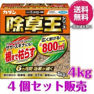 ※九州は200円・北海道・沖縄県は800円別途送料がご必要となります。ご了承ください。  ●6ヶ月間...