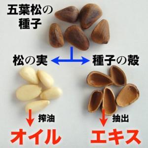 五葉の松種子SPNエキス『ブラック』90粒|pejapan|04