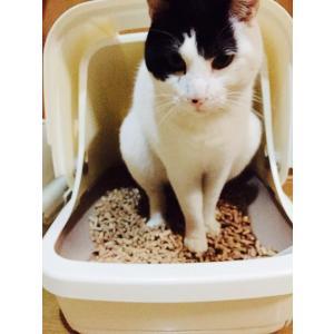 猫砂用ペレット 猫ちゃんも快適です! お試し2種類セット シロマツ・クロマツ 10kg×2袋(約33L)入り一箱 (猫砂用木質ペレット)