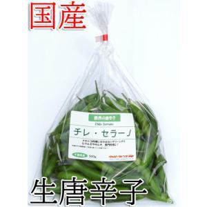 セラーノ(serrano)は細長く5cmほどのグリーンチリ(青唐辛子)で、日本では珍しい唐辛子ですが...