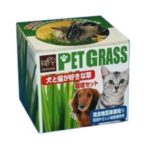 PetGrass 犬と猫が好きな草 栽培セット pet-square-cat