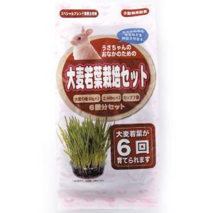 アラタ うさちゃん用 大麦若葉栽培セット 6回分|pet-square