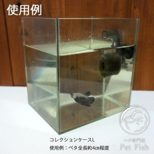 ベタ 水槽 飼育セットコレクションケースL  ペット用品