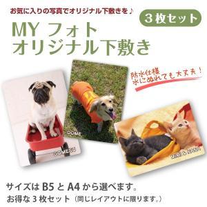犬・猫の写真入り下敷き  MY フォト オリジナル下敷き 3枚 petgp