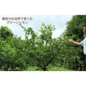 湘南グリーンレモンケーキ5個入り petitefleur-yokohama 04