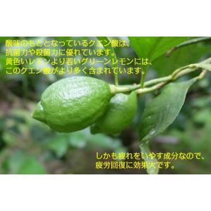 湘南グリーンレモンケーキ10個入り|petitefleur-yokohama|02