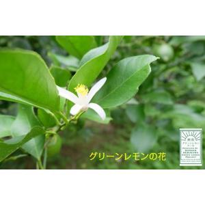 湘南グリーンレモンケーキ10個入り|petitefleur-yokohama|04