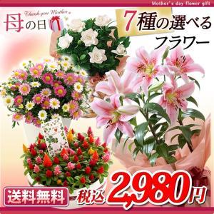 母の日 2016 ギフト プレゼント 花  7種から選べる人気フラワー 鉢植え(5月9日以降のお届け)|petkan