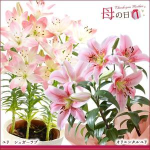母の日 2016 ギフト プレゼント 花  7種から選べる人気フラワー 鉢植え(5月9日以降のお届け)|petkan|02