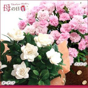 母の日 2016 ギフト プレゼント 花  7種から選べる人気フラワー 鉢植え(5月9日以降のお届け)|petkan|04