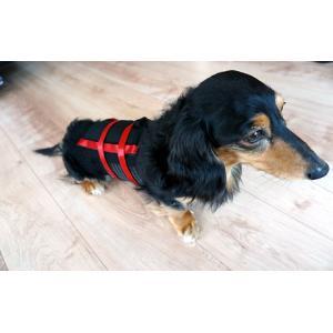 犬用コルセット・猫用コルセット - サイズ: 小 petlab 02