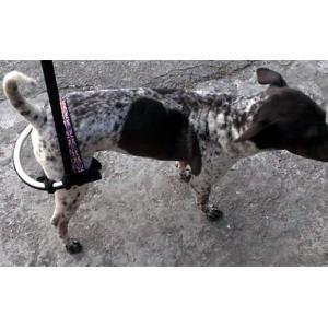 犬用リハビリ用ハーネス・猫用リハビリ用ハーネス - サイズ: L petlab