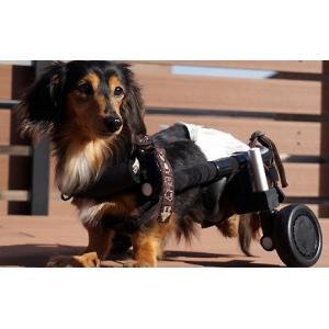 犬用車椅子・猫用車椅子 - サイズ: XXL|petlab